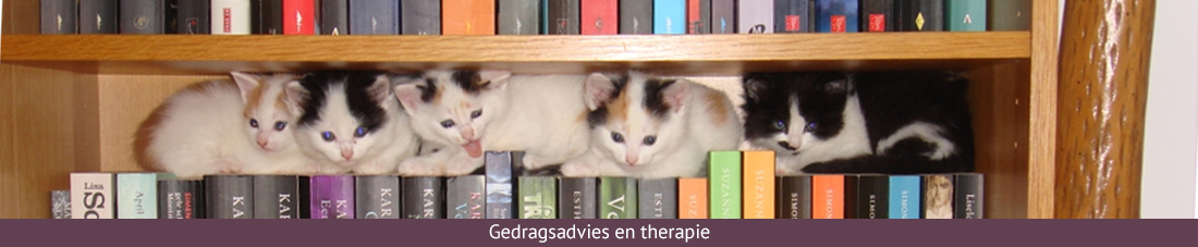 gedragsadvies en therapie banner